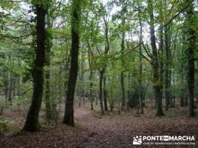 Cañones y nacimento del Ebro - Monte Hijedo;excursiones comunidad de madrid;ruta alto tajo